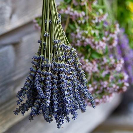 nervine herbs